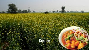 Daily Delight Curries